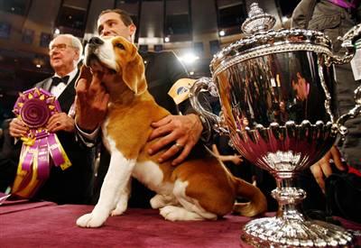 Dog Show Winner