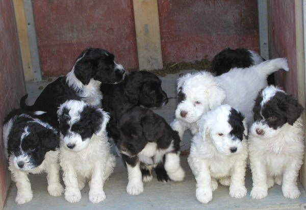 dogs and puppies. Puppies: