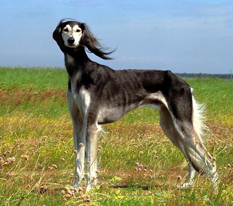 Dog breeds information