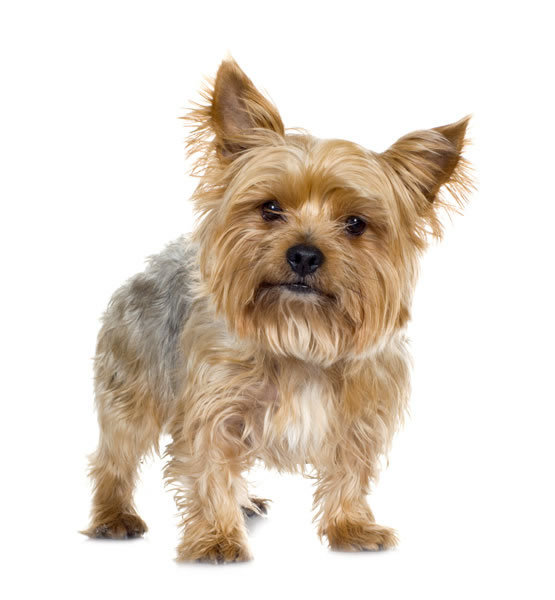 Dog Breeds Info - Over 150 Different Dog Breed Profiles