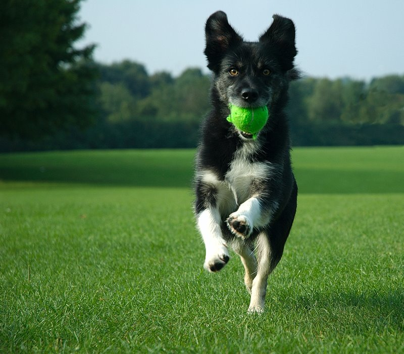 Good ways to exercise your dog